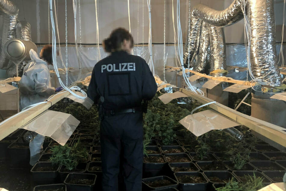 Berlin: Polizei hebt große Cannabisplantage aus
