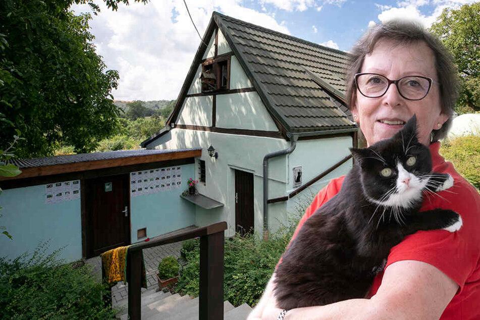 Miezen-Alarm! In diesem Altersheim wimmelt es nur so von tierischen Rentnern