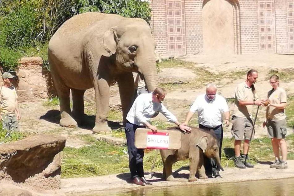 Vor gut zwei Wochen wurde der kleine Elefant endlich feierlich getauft.