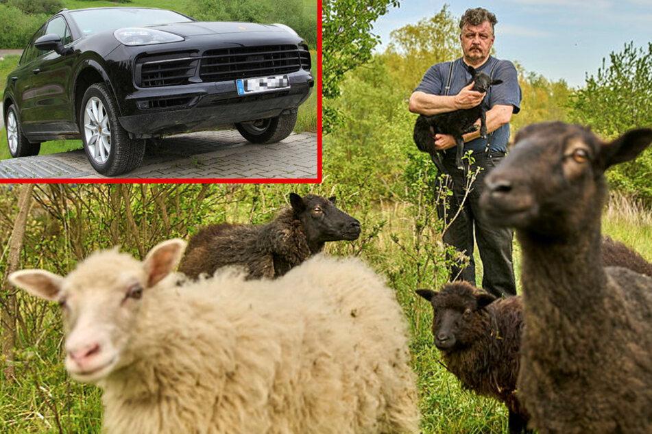 Leipzig: Leipzig: Warum sich das Porsche-Werk elf Schafe als Leiharbeiter hält