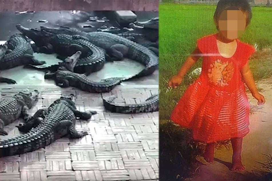Familie unter Schock: Tochter (†2) fällt in Krokodilgehege und wird bei lebendigem Leib gefressen