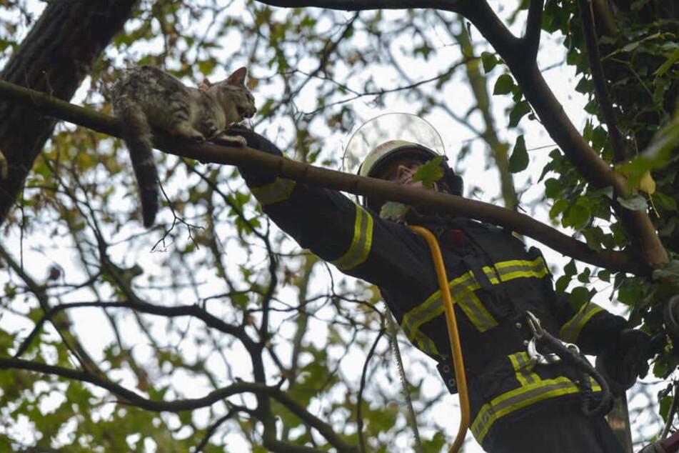 Feuerwehr rettet vermissten Kater aus luftiger Höhe