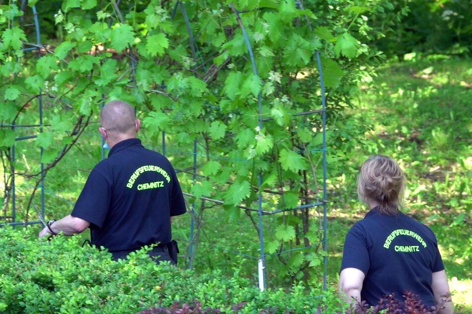 Die Chemnitzer Feuerwehr rettete das Tier und scheuchte es aus dem Grundstück in die Freiheit.