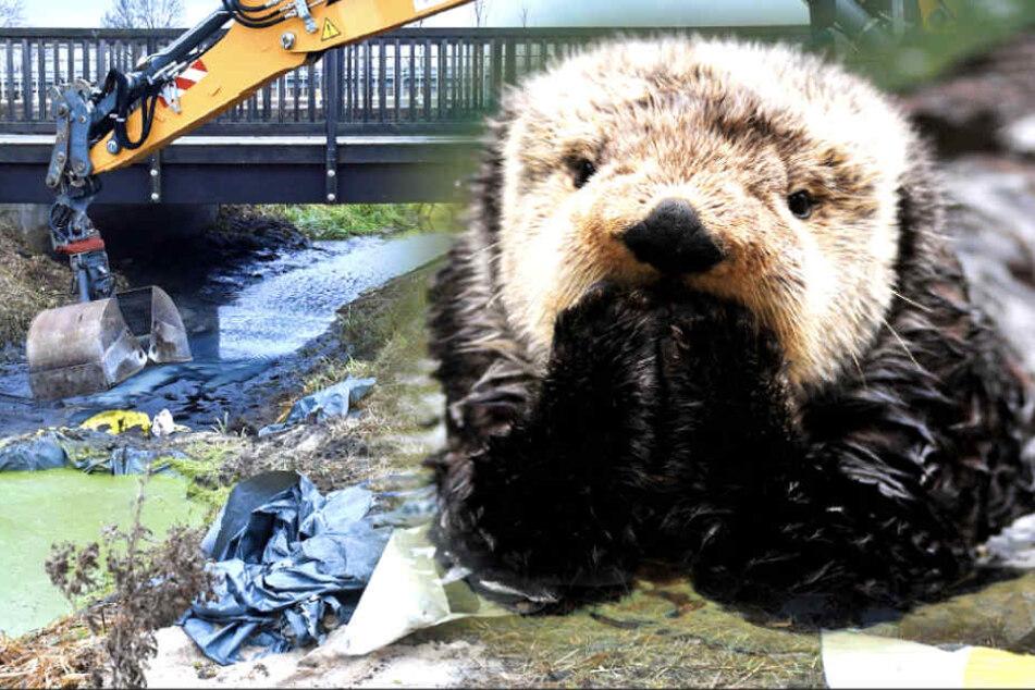Hier können kleine Otter bald unbesorgt spazieren gehen!