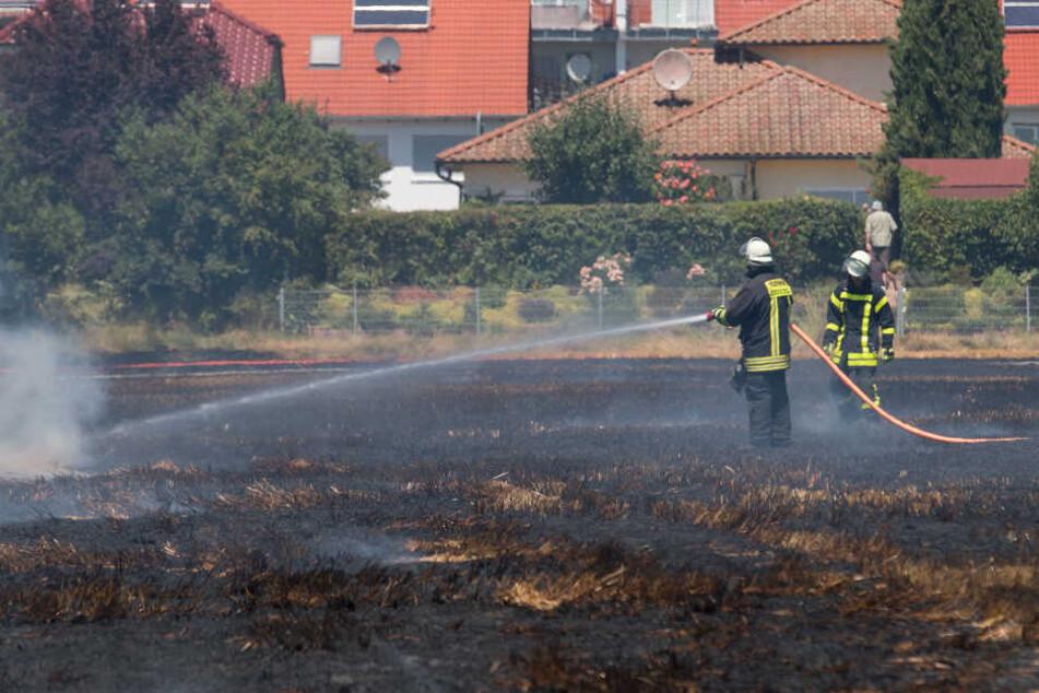 Feldbrand droht auf Wohngebiet überzugreifen