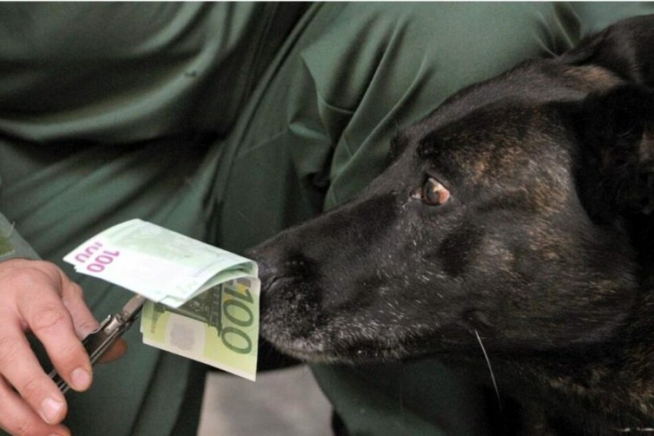 Es war der Spürhund, der die Polizisten auf die Geld-Spur brachte.
