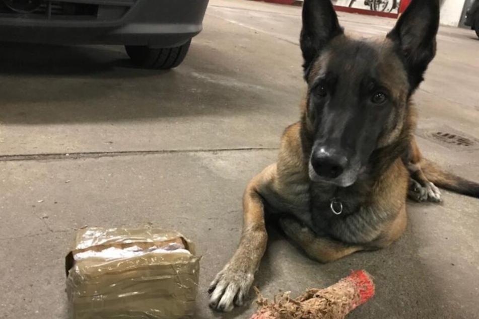 Nix los ohne Enox! Spürhund ist Super-Schnüffler bei der Polizei