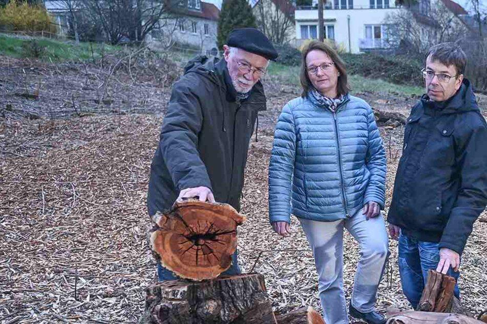 Streuobstwiese beseitigt: Rathaus ermittelt nach illegaler Baumfällung