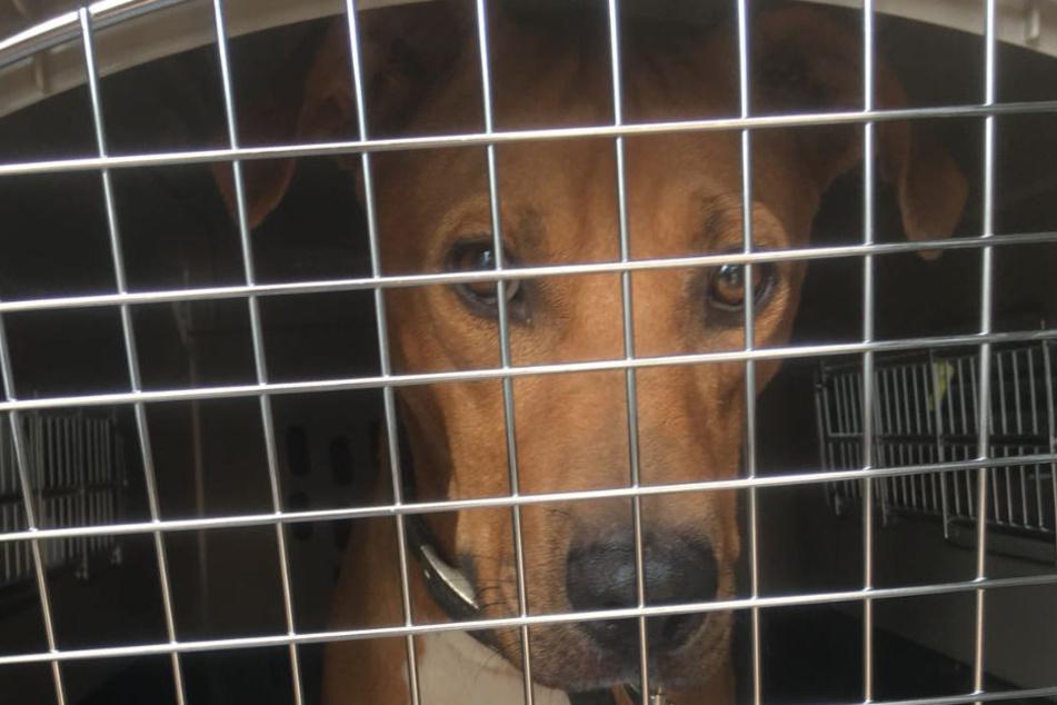 Die Tiere werden in Transportboxen in das Flugzeug oder in dem Gepäckraum mitgenommen.