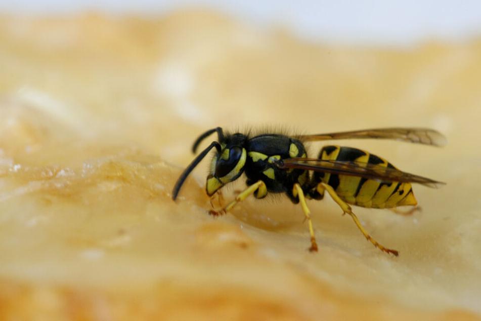 Wespen sind in diesem Jahr seltener als im Jahr zuvor.
