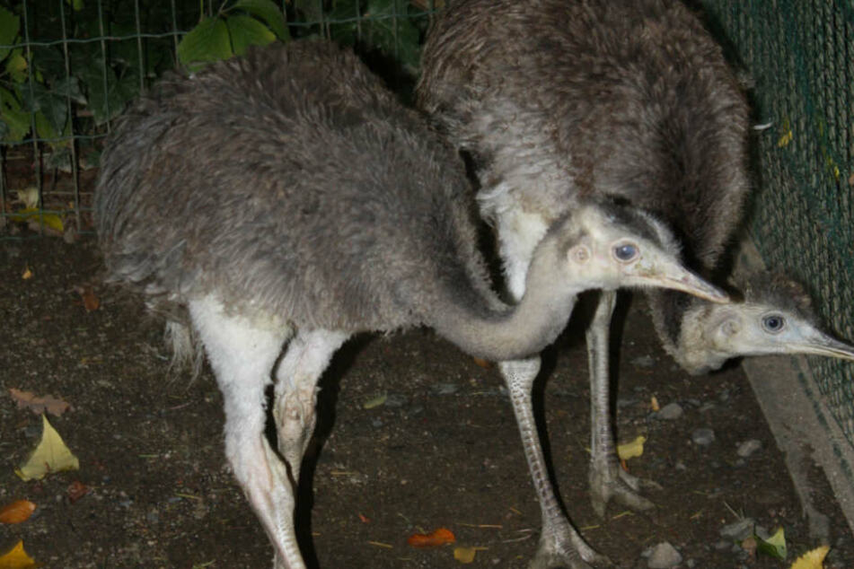 Noch sind sie zu klein, um zu den anderen Tieren ins Großgehege zu ziehen.