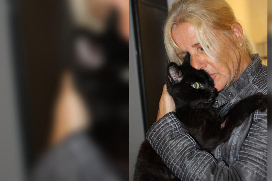 Totgeglaubte Katze findet nach mehr als sechs Jahren ihre Familie wieder