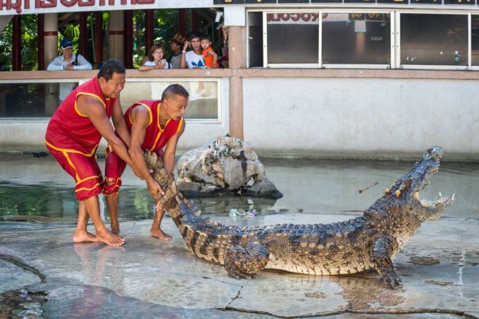 Die Krokodile brachen aus einer Krokodilfarm aus. Ähnlich wie die in Samut Prakan.