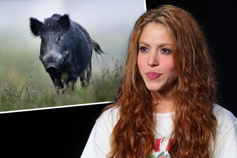 Wild run in! Shakira details attack by boars in the park