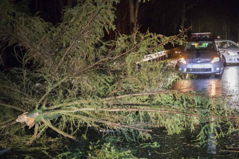 Viele Bäume stürzten durch den Sturm um, wie hier, zwischen Mildenau und Geyersdorf im Erzgebirge.