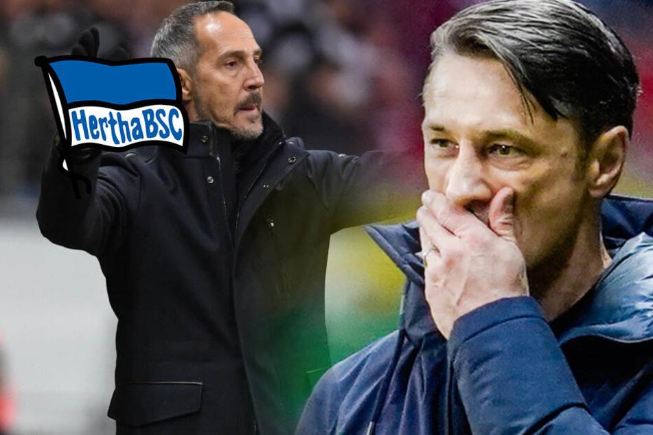 Hertha auf Trainersuche: Wird es Hütter statt Kovac?