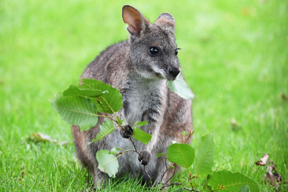 Rund ums Thema Australien geht's im Reisefilm im Pollux. (Symbolbild)