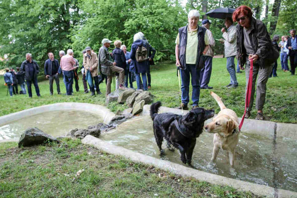 Die Teichanlage im Fichtepark ist wieder in Betrieb. Die Hundedamen Pauline (11, l.) und Zora (6) wagten sich sofort ins Wasser.