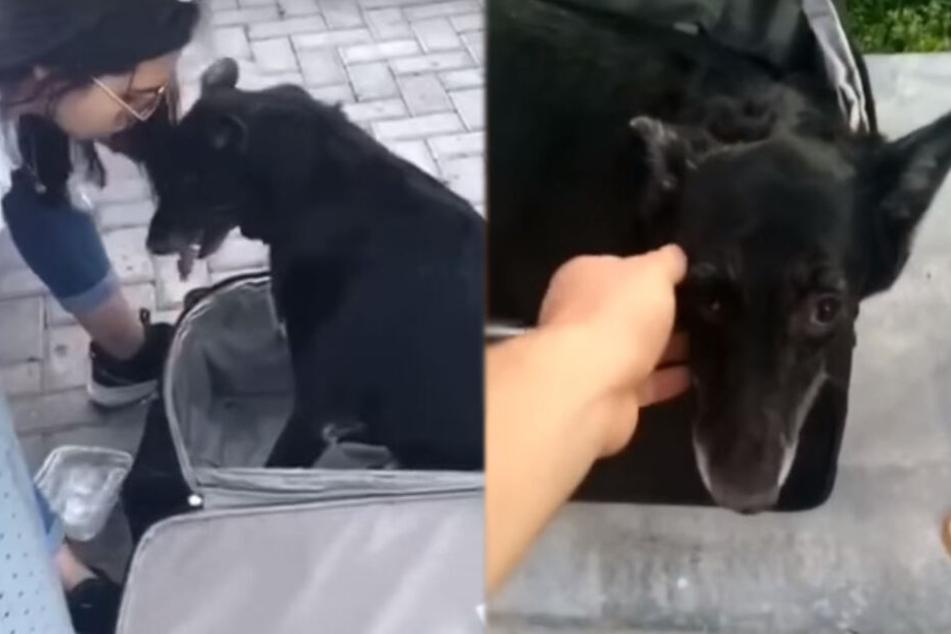 Mädchen rettet Hund aus Koffer, doch dann wird es traurig