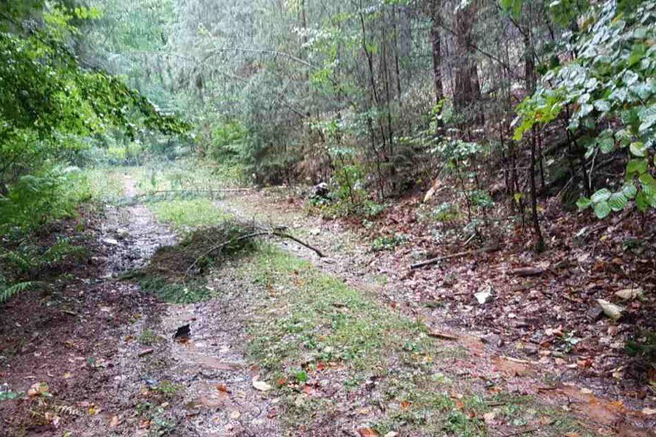 In dieses Waldgebiet war der Jet gestürzt.