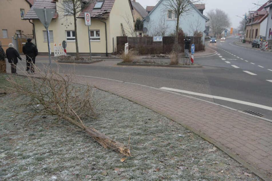 Auch ein Baum fiel dem Unfall zum Opfer.