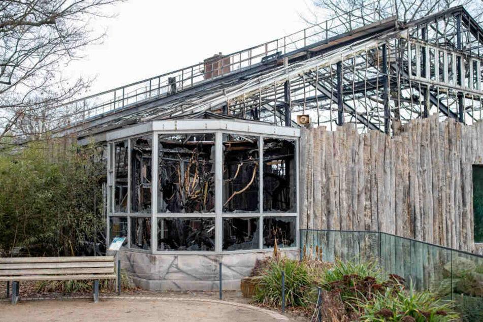 Das abgebrannte Affenhaus des Krefelder Zoos.