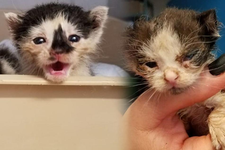 Die kleinen Katzenbabys waren überhitzt, ausgetrocknet und sind immer noch sehr schwach.