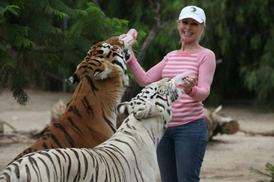 Tragisch! Tierschützerin von Tigern zerfleischt: Sie waren ihre Babys