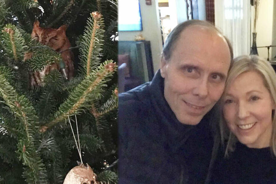 Familie völlig perplex: Eule lebt in ihrem Weihnachtsbaum