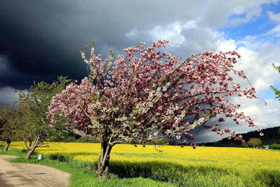 Erst am Sonn- und Feiertag wird das Wetter endlich besser...