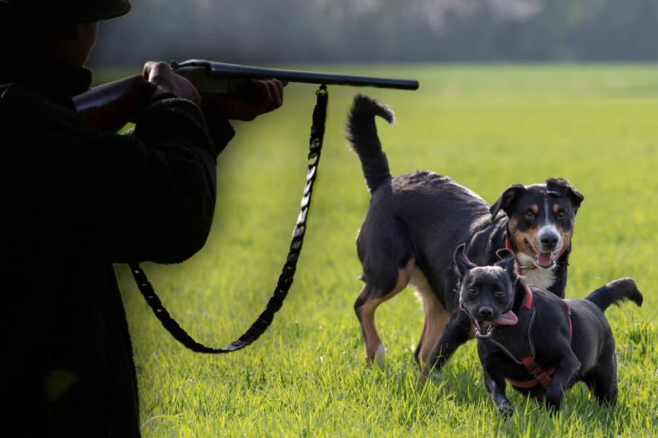 Jäger knallt Hunde vor den Augen ihrer Besitzerin ab: Urteil gefallen!