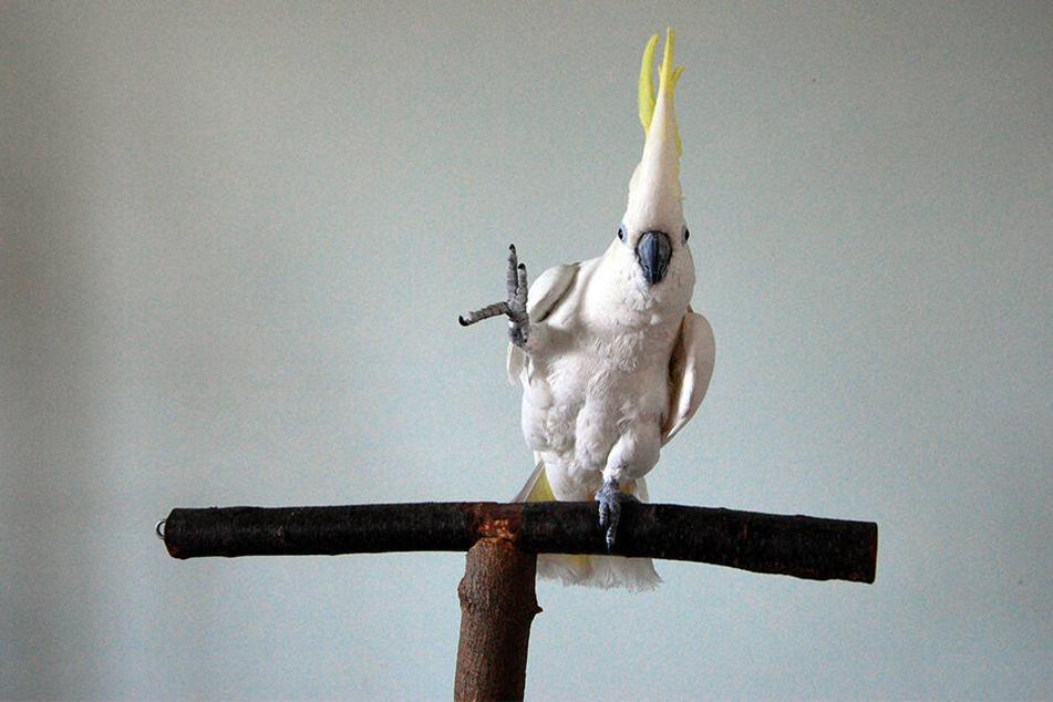 Vögel sind laut den Experten die einzigen Tiere, die Bewegungen auf Musik abstimmen können.
