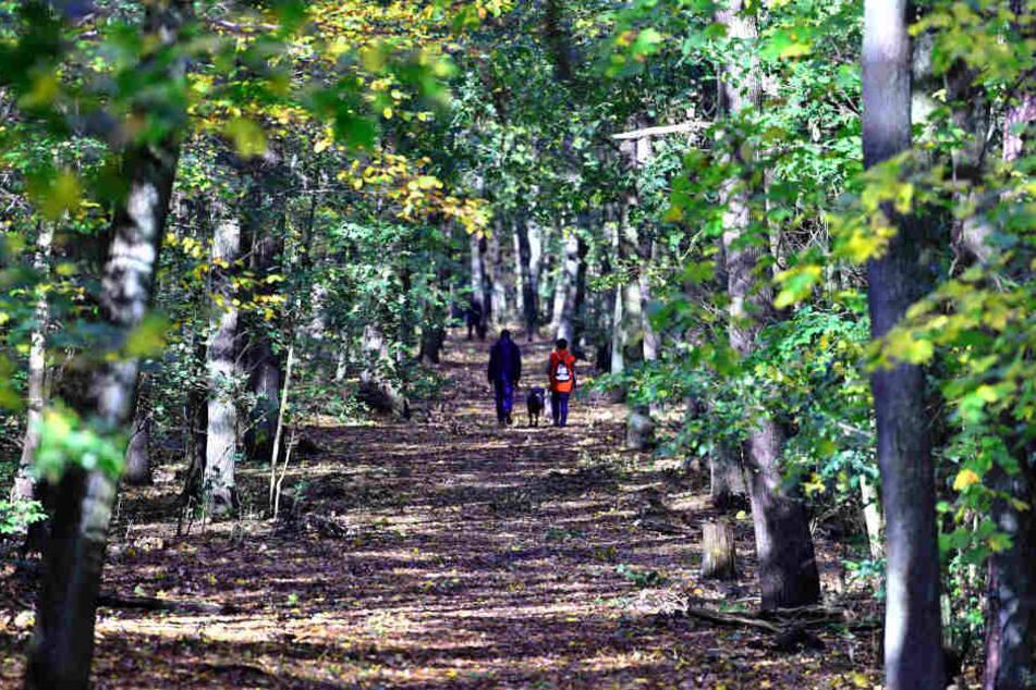 Es ist kein schöner Anblick, was sich Spaziergängern in den Wäldern des Weimarer Landes immer häufiger bietet.
