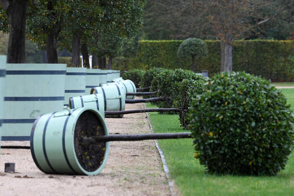 Im Schlosspark Sanssouci in Potsdam wurden durch den Sturm zahlreiche Kübelpflanzen umgestoßen.