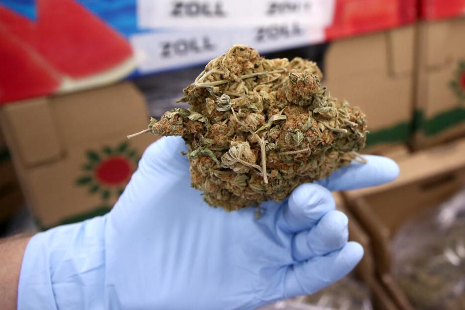 Die Schmuggler dealten mit Marihuana im großen Stil.