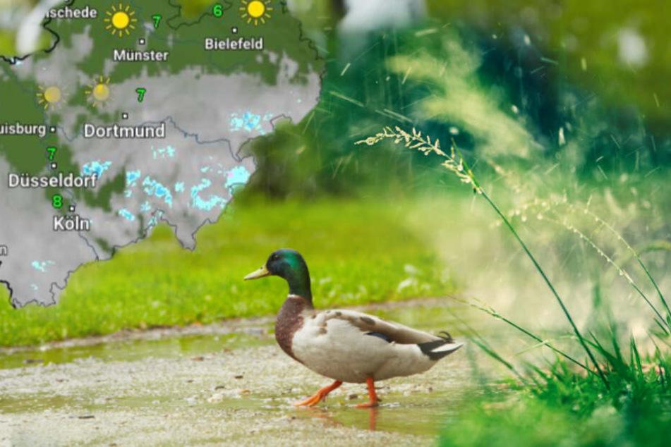 Das Wetter in NRW bleibt am Wochenende erstmal regnerisch.