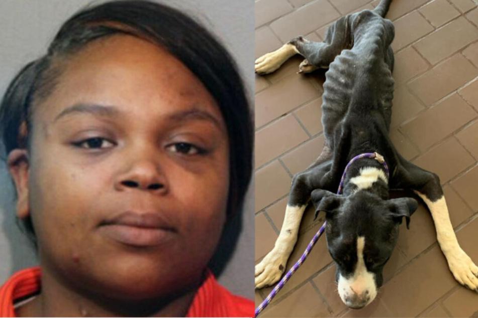 Hund wird von seiner Besitzerin zum Sterben zurückgelassen