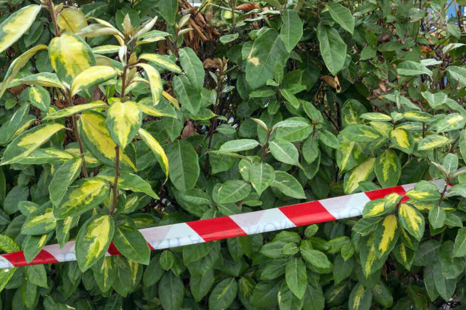 In einem Gebüsch in Berlin-Kreuzberg wurde ein toter Säugling gefunden (Symbolbild).