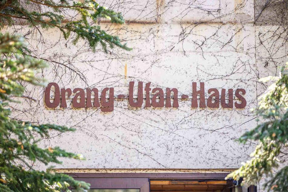 Das Orang-Utan-Haus wurde 1985 erbaut, ist nun ein Fall für die Justiz.