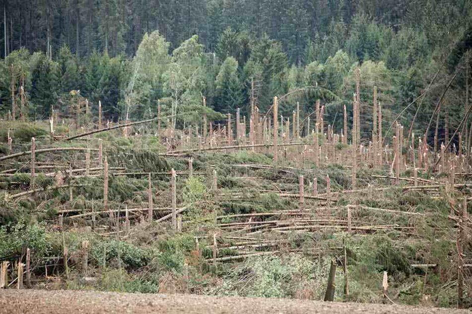 Waldschäden bei Zwönitz im Erzgebirge: Dürre, Stürme und Schädlinge haben den Wäldern ungemein zugesetzt.