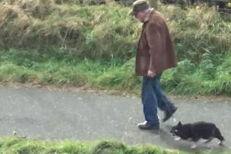 Schock-Video:  Tierquäler schlägt Hund beim Gassi gehen