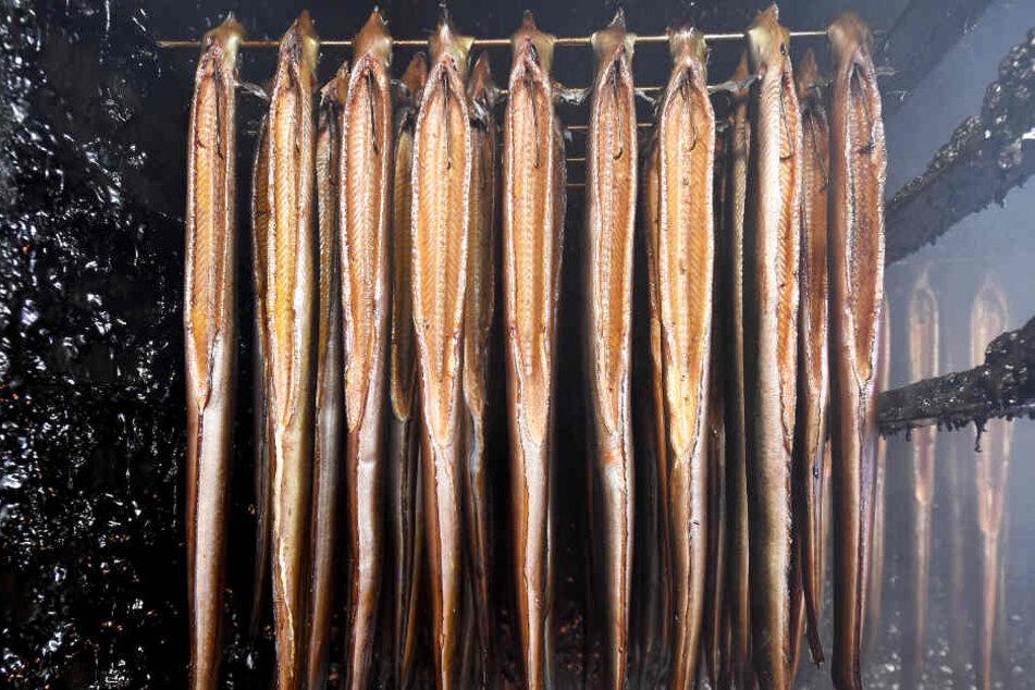 In einem Räucherofen hängen Aale.