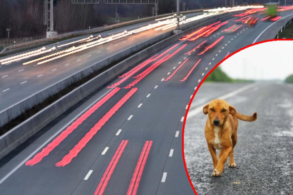 Hund sorgt für Vollsperrung der Autobahn