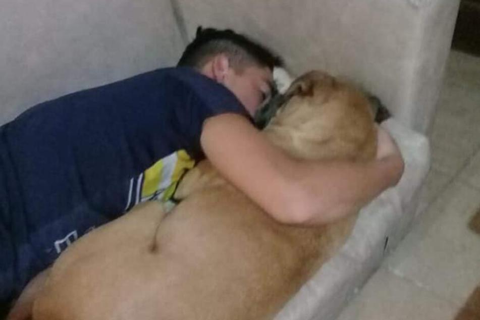 Hund stirbt in Armen seines Herrchens, wegen Feuerwerkslärm