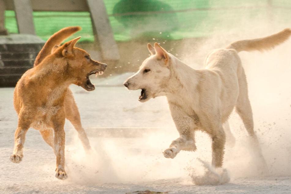 Die Straßenhunde töteten das Kind (†7) (Symbolbild).