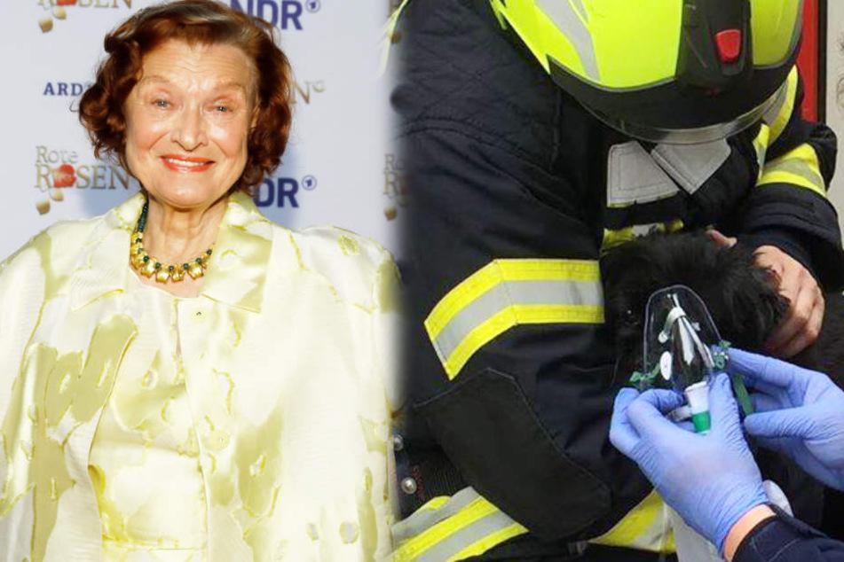 Brand bei Rote-Rosen-Star: So dramatisch lief die Rettung ihres Hundes ab