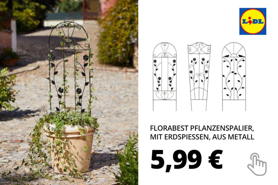 FLORABEST Pflanzenspalier