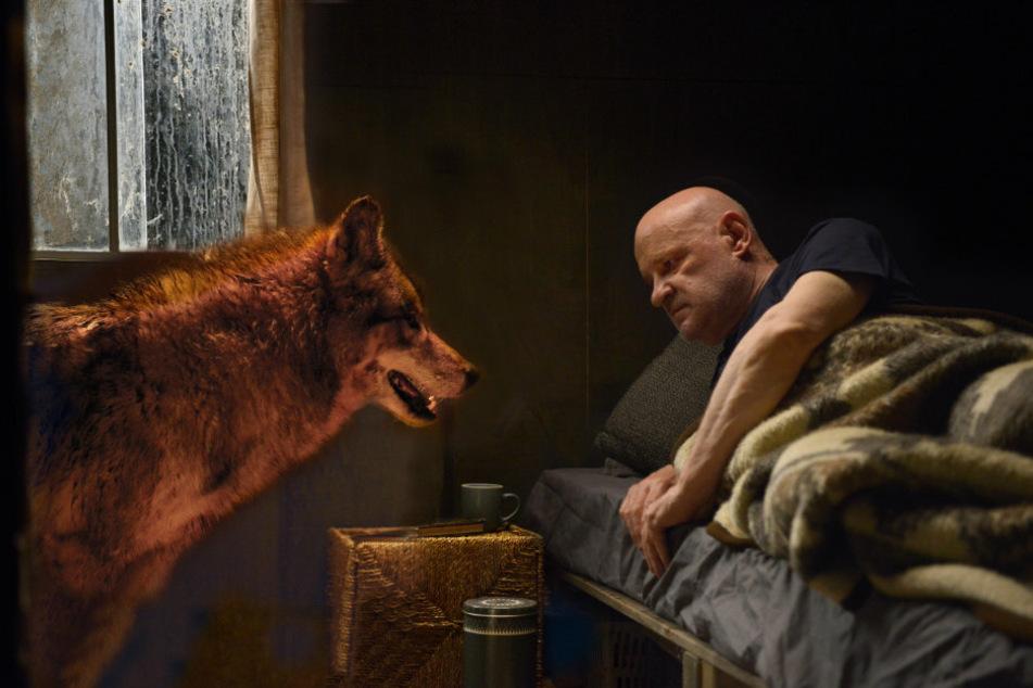 """Berlin: """"Spreewaldkrimi""""-Star Christian Redl lockte beim Dreh echten Wolf mit Leberwurst an"""