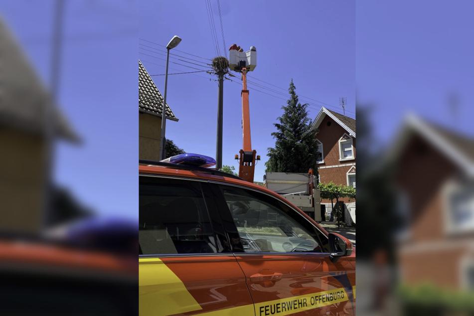 Die Feuerwehr Offenburg holen zwei tote Jungstörche von einem Strommast in Offenburg.