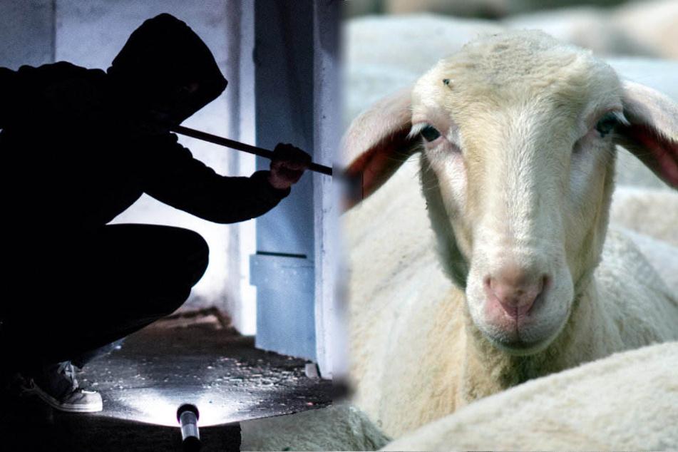 Die unbekannten Täter hebelten die Tür zum Stall auf. (Symbolbild)